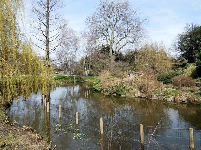 Lake In Regent's Park