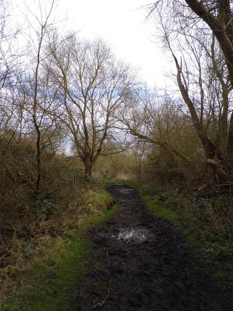 Bridleway leading to Kempton Park