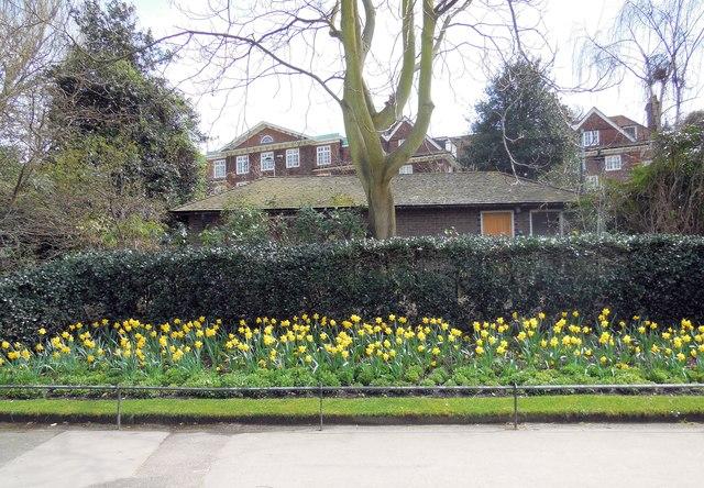 Flowerbed in Regent's Park