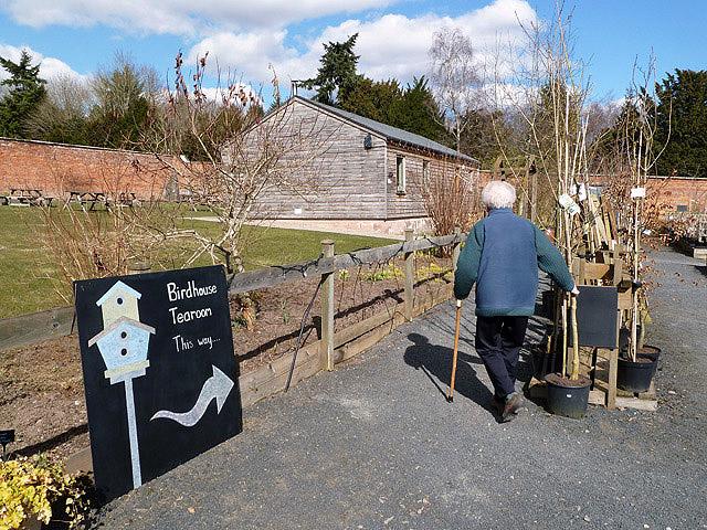 The Birdhouse Tea Room this way