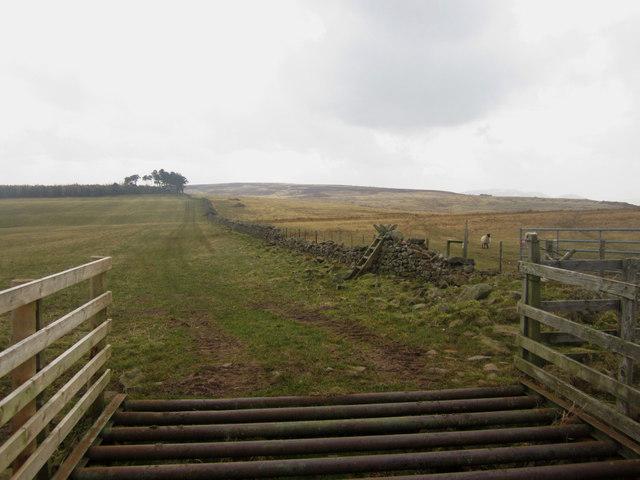 Grass field on Horton Moor