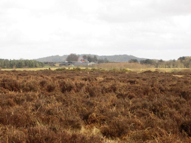 Heather moor near Kemping Moss