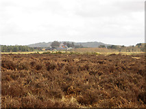 NT9937 : Heather moor near Kemping Moss by Graham Robson