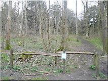 TQ0950 : Mountain Wood, Sheepleas by David Howard
