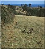 SX9050 : Field near Coleton Fishacre, 1990 by Derek Harper
