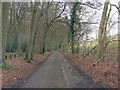 SU8188 : Un-named road runs beside Holme Wood by Stuart Logan