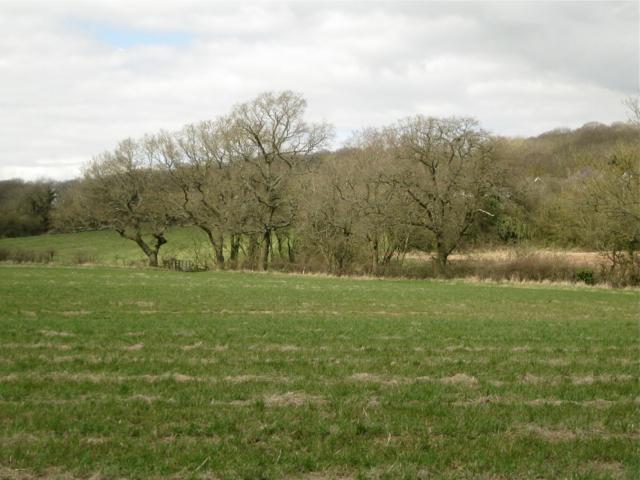 Field corner with footbridge