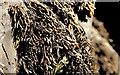 J5264 : Seaweed, Reagh Island (1) by Albert Bridge