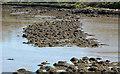 J5263 : The loughshore, Mahee Island (3) by Albert Bridge