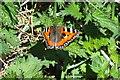 TM0026 : Small Tortoiseshell  Aglais urticae by Peter Pearson