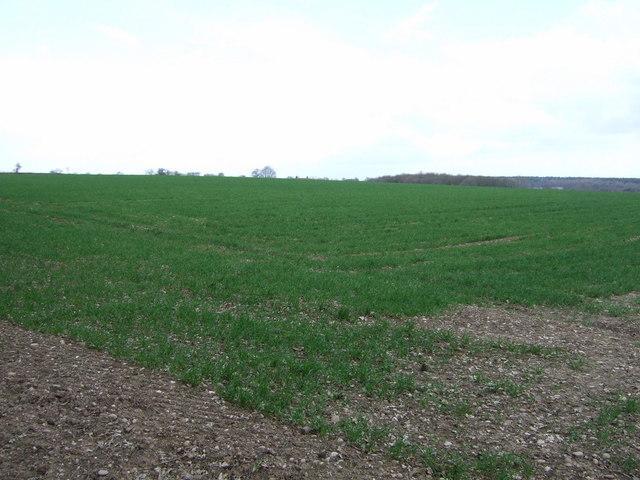 Farmland, The Warren