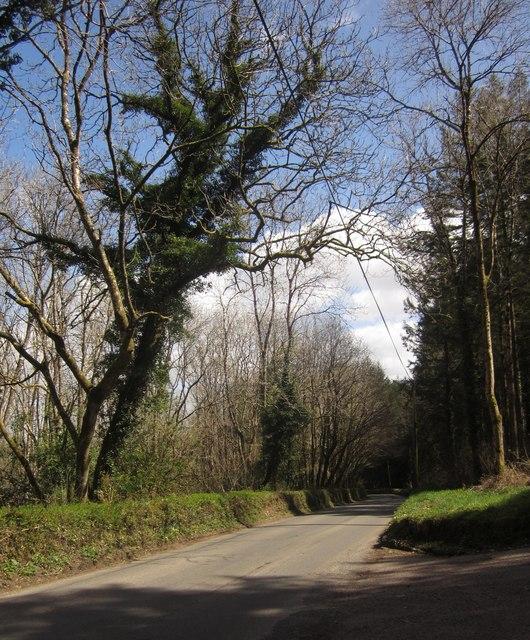 Road through Flashdown Plantation