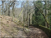 SK2086 : Footpath by Ladybower Wood by Andrew Hill