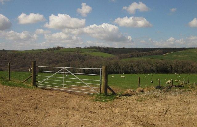 Sheep near Kennydown Farm