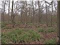 TL7830 : Shardlowe's Wood, part of Broaks Wood by Roger Jones