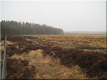 NZ7813 : Newton  Mulgrave  Moor  and  Newton  Mulgrave  Wood by Martin Dawes