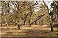 TL1948 : Woodland path by Richard Croft