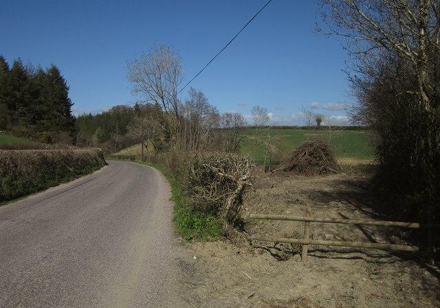 Felled area by Tarka Trail