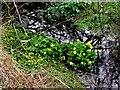 H5588 : Wild plants, Gorticashel Lower by Kenneth  Allen