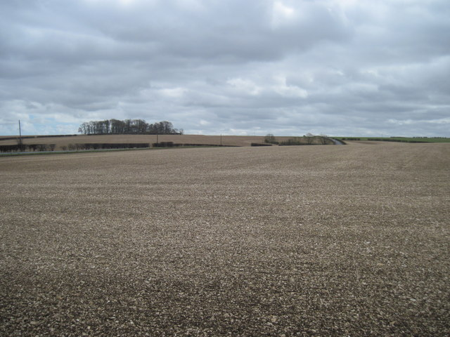 Planted  fields  on  the  Yorkshire  Wolds