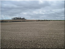 SE8665 : Planted  fields  on  the  Yorkshire  Wolds by Martin Dawes