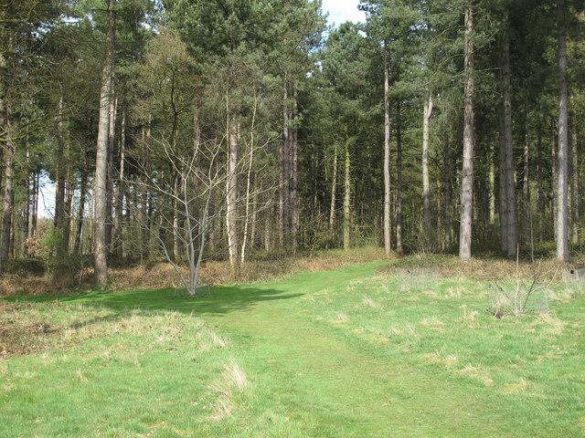 Entrance to conifer woodland, Marks Hall Estate