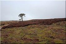SE0699 : Lone Tree, Marrick Moor by Mick Garratt