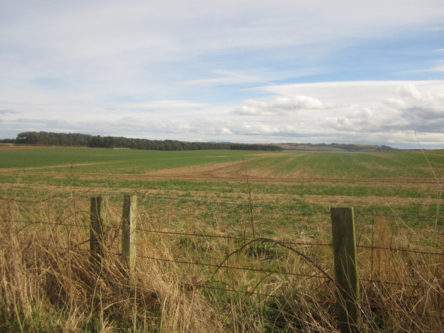 Arable land at Ross