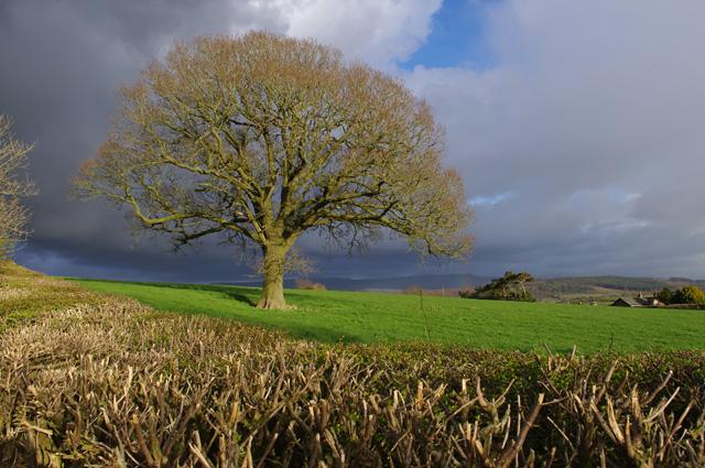 Farmland near Haverbreaks Farm