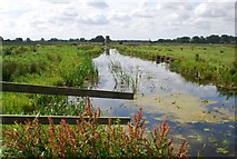 TG3504 : Main drain, Buckenham Marshes by Jeremy Halls