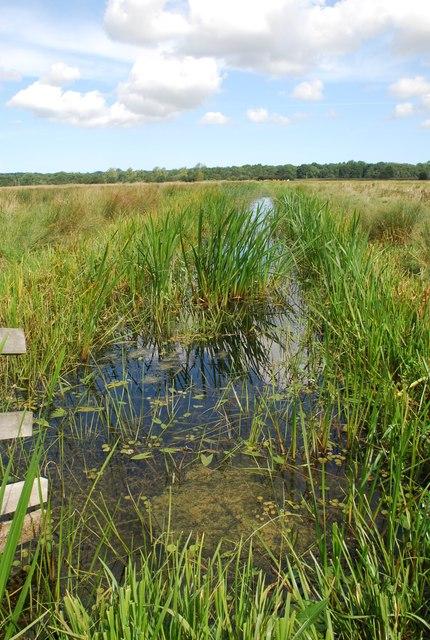 Marsh dyke, Buckenham