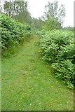 SK2563 : Track on Stanton Moor by Graham Horn
