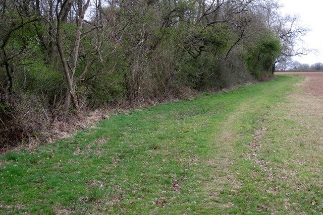 The edge of Foxcote Wood
