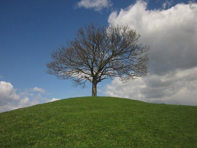 Tree on Burrow Hill