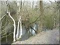 SJ8148 : Perch Pool, Watermills Wood by Christine Johnstone