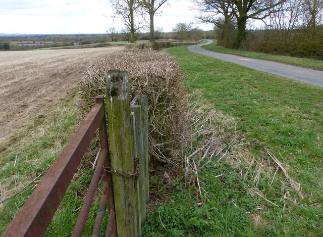 Gate and hedge along Dunton Lane by Mat Fascione