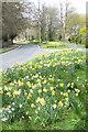 SE7871 : Floral verges by Pauline E