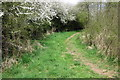 SP8524 : Footpath through the woods by Philip Jeffrey