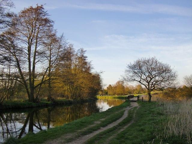 The Wey Navigation below Trigg's Lock (3) - with alders