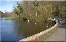 NS2209 : Swan pond, Culzean Castle by Rossographer