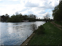 TQ1667 : The River Thames and Thames Ditton Island by David Purchase
