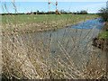 TG4010 : Drainage ditch in marsh pastures by Broad Farm, Acle by Evelyn Simak