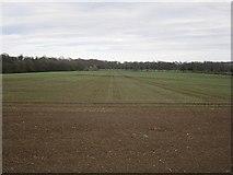 NT5682 : Spring barley by Richard Webb