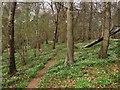 TQ1515 : Tall Wood by Simon Carey