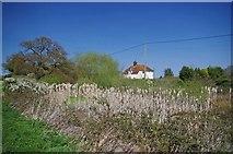 TL9011 : A Reedy Pond in Tolleshunt Major by Glyn Baker