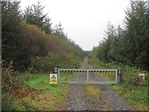 H1491 : Logging road by Richard Webb