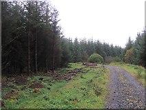 H1490 : Sitka spruce plantation, Corraffin by Richard Webb