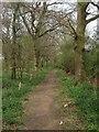 TQ1415 : Bridleway, Brownhill Wood by Simon Carey