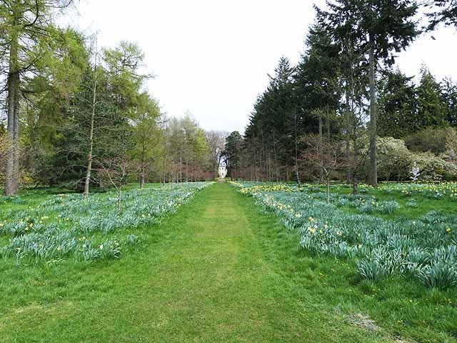 Main Avenue, Thorp Perrow Arboretum