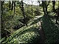 SJ8182 : Footbridge near the River Bollin by Ian Paterson